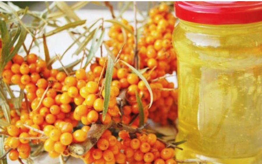 Cătina, elixirul imunității – conține peste 9 vitamine și de 10 ori mai multă vitamina C decât citricele. Ce alte beneficii are: